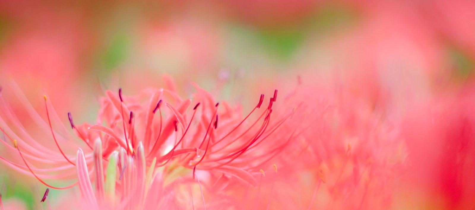 花がら摘みは、ゆかしき